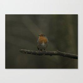 European Robin Canvas Print