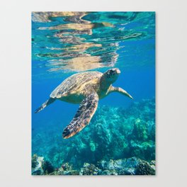Large Sea Turtle, Marine Turtle, Chelonioidea, reptile animal swimming in clear and clean water Canvas Print