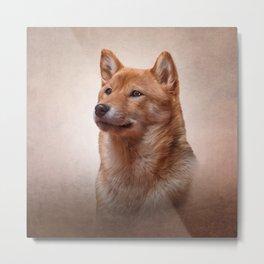 Drawing Japanese Shiba Inu dog  Metal Print