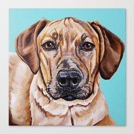 Kovu the Dog's pet portrait Canvas Print