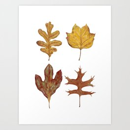 Fall Leaves Painting Art Print