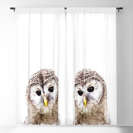 Baby Owl, Baby Animals Art Print By Synplus Blackout Curtain