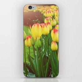 Yellow Red Tulips iPhone Skin