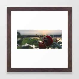 Rose Hip at Sunset Framed Art Print