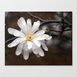 Magnolia I Canvas Print