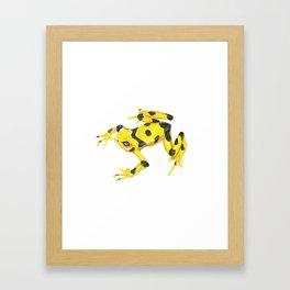 Panamanian Golden Frog Framed Art Print