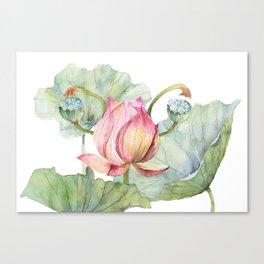 Lotus Metaphor for Feminine Beggining Canvas Print