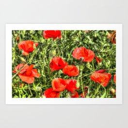 Poppys Of Summer Art Print