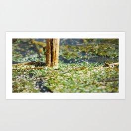 Microcosmia IV Art Print