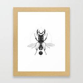 Sun Beetle Framed Art Print