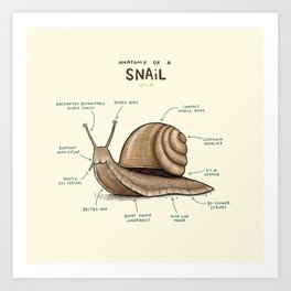 Anatomy of a Snail Art Print