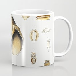 Sea snail varieties set  from Mollusca  Shells by Augustus Addison Gould Coffee Mug