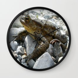 Bufo Bufo Toad Lounging On Stones Wall Clock