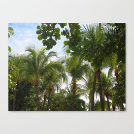 Palmtrees Canvas Print