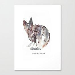Lepus Californicus Canvas Print