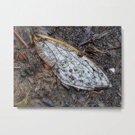 Rain wing Metal Print