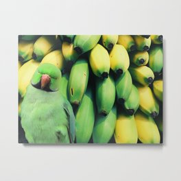 green banan ringneck Metal Print