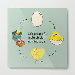 Life cycle of a male chick Metal Print