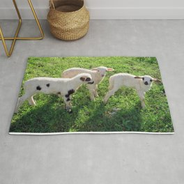 Three Cute Spring Lambs Rug
