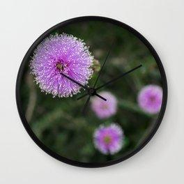 Mimosa flower in Malibu, California Wall Clock