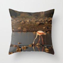 Birds of Namibia 3 Throw Pillow