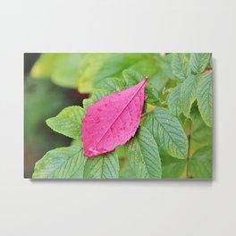Pink leaf on green leaves Metal Print