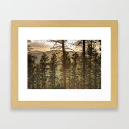 Mountain Forest New Mexico - Nature Photography Framed Art Print