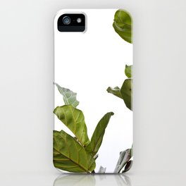 Fiddle Leaf Fig  |  The Houseplant Collection iPhone Case