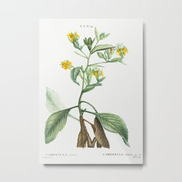 Musschia aurea (Campanula aurea) from Traite des Arbres et Arbustes que lon cultive en France en ple Metal Print