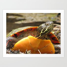 PAINTED TURTLE - WITH ATTITUDE Art Print
