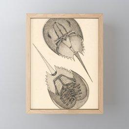 Horseshoe Crabs Framed Mini Art Print