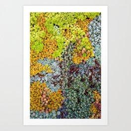 Wall of Succulents Art Print