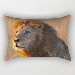 Lion in the morning light, Africa wildlife Rectangular Pillow