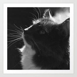 Black & White Cat Art Photograph Feline Art Print