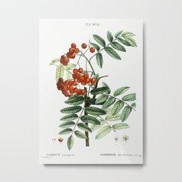Mountain ash (Sorbus aucuparia) from Traité des Arbres et Arbustes que l'on cultive en France en ple Metal Print