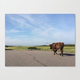 Longhorn walk Canvas Print