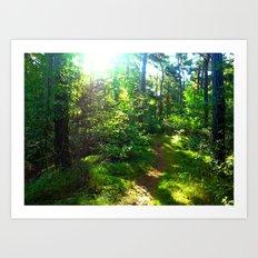 Sunshine Forest Art Print