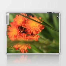 Orange Hawkweed Wildflowers Laptop & iPad Skin