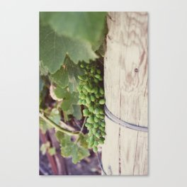 Cluster of Grapes Canvas Print