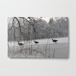 Nature and Animal(s) 2 Metal Print