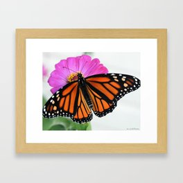 monarch/flower Framed Art Print