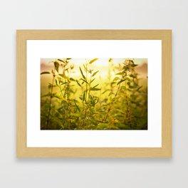 meadow herbs Framed Art Print
