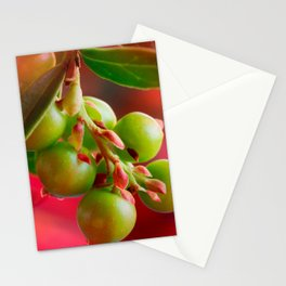 Green Berries Red Background #society6 #decor #buyart Stationery Cards