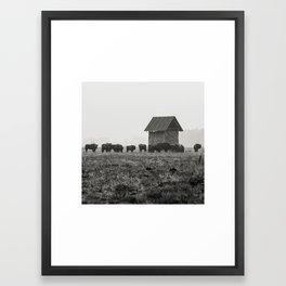 European Bison, Białowieża National Park Framed Art Print