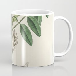 Liquorice (Glycyrrhiza glabra)  from Medical Botany (1836) by John Stephenson and James Morss Church Coffee Mug