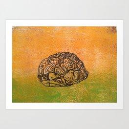 Peek-a-boo tortoise Art Print