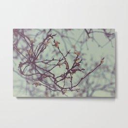 Flaking petals Metal Print