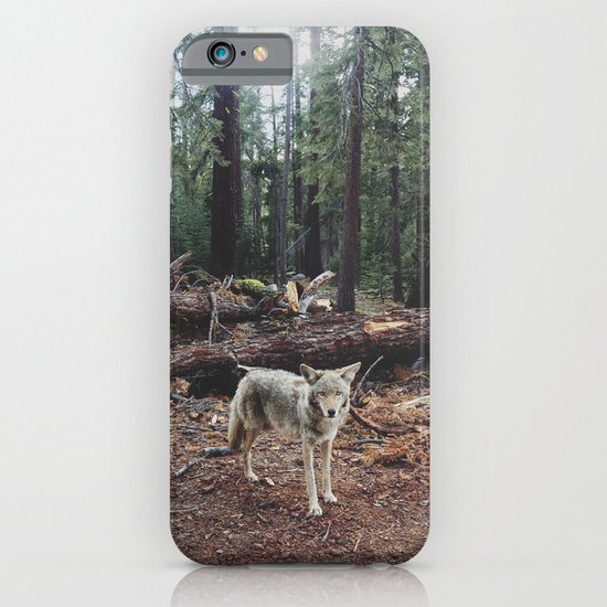 Injured Coyote iPhone & iPod Case