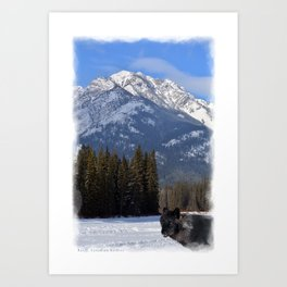 """Banff Wolf in Winter with Mt Cascade"" Art Print"