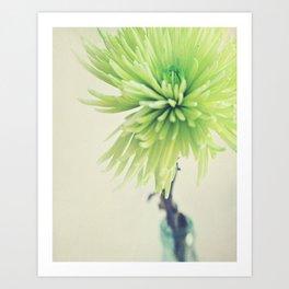 Flower Photo. Spider Mum Art Print